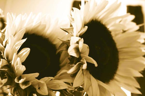 Sunflowers Art Print featuring the photograph Antique Petals by Jill DeSousa