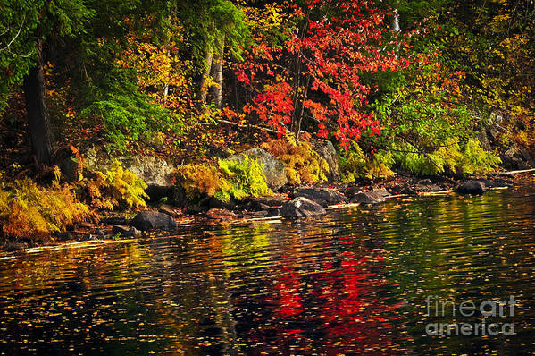 Autumn Art Print featuring the photograph Autumn Forest And River Landscape by Elena Elisseeva