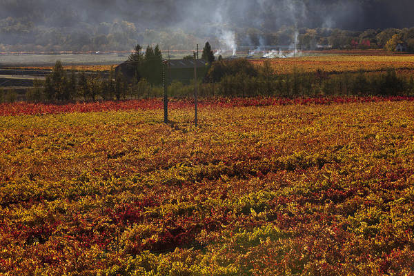 Autumn Art Print featuring the photograph Autumn In Napa Valley by Garry Gay