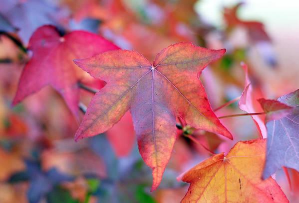 Leaf Art Print featuring the photograph Autumn Rainbow by Barbara Domanska