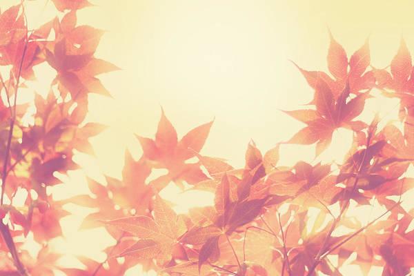 Autumn Print featuring the photograph Autumn Sky by Amy Tyler
