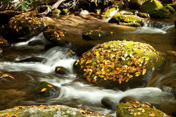 Autumn Art Print featuring the photograph Autumn Stream by Lena Auxier