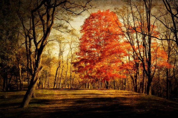 Fall Art Print featuring the photograph Autumn Trail by Kathy Jennings