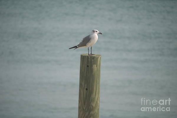 Bird Art Print featuring the photograph Balanced by Heather Hennick
