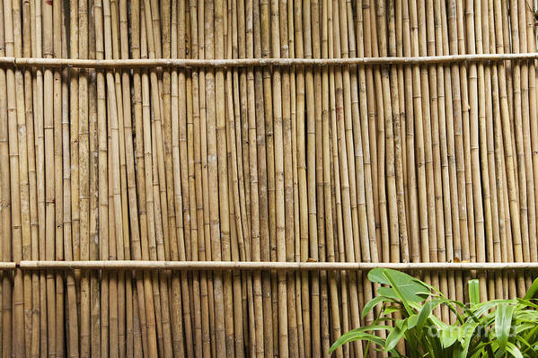Architectural Detail Art Print featuring the photograph Bamboo Fence by Don Mason