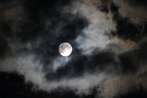 Moon Art Print featuring the photograph Bark At The Moon by Tricia Janush