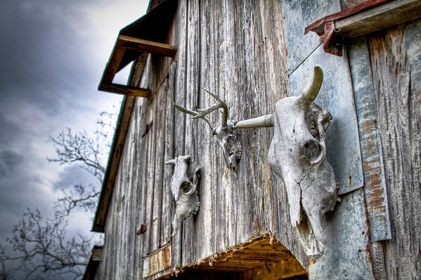 Cow Art Print featuring the photograph Barnstorm by Pixel Perfect by Michael Moore