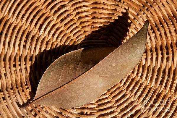 Brown Art Print featuring the photograph Basket Of Brown by Dan Holm