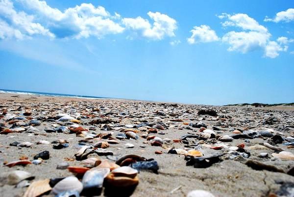 Beach Art Print featuring the photograph Beachy Delight by Lizabeth Hanes