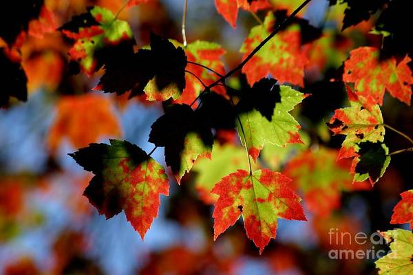 Autumn Art Print featuring the photograph Beautiful Autumn by Living Color Photography Lorraine Lynch