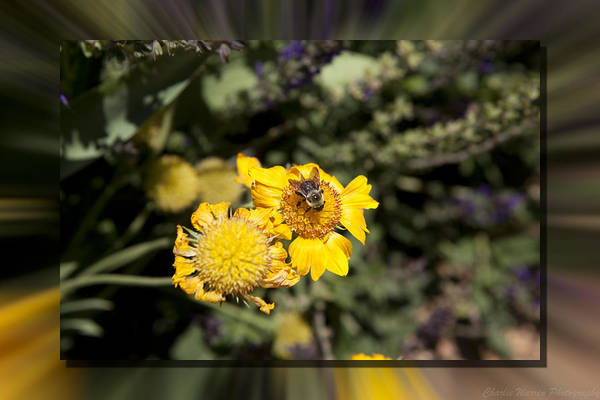 Flower Art Print featuring the photograph Behave by Charles Warren