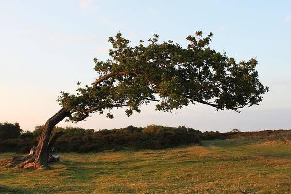 Landscape Art Print featuring the photograph Bent Tree by Katie Bingham