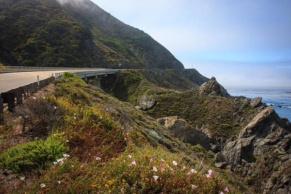 Northern California Art Print featuring the photograph Big Sur Road Wildflowers by Dina Calvarese