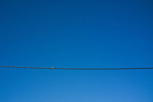 Horizontal Art Print featuring the photograph Bird On Wire by Luke Hayden