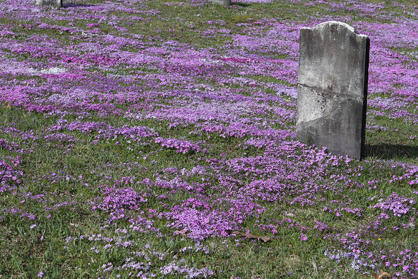 Tombstone Art Print featuring the photograph Blank Colonial Tombstone Amidst Graveyard Phlox by John Stephens