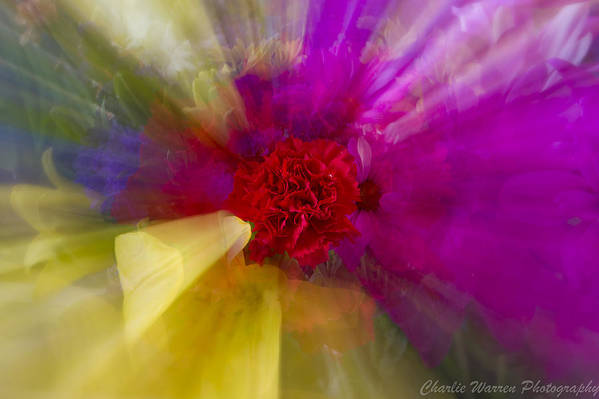 Flower Art Print featuring the photograph Bloom Zoom2 by Charles Warren