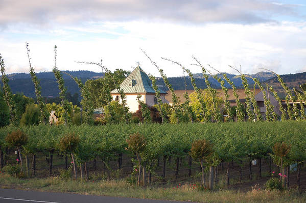 Blowing Grape Vines Vineyards Rustic House Winery Napa California Ca Wine Art Print featuring the photograph Blowing Grape Vines by Holly Blunkall