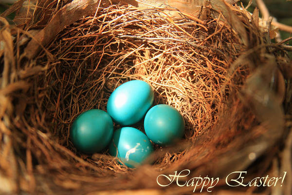 Bird Art Print featuring the photograph Blue Eggs In Nest by Emanuel Tanjala