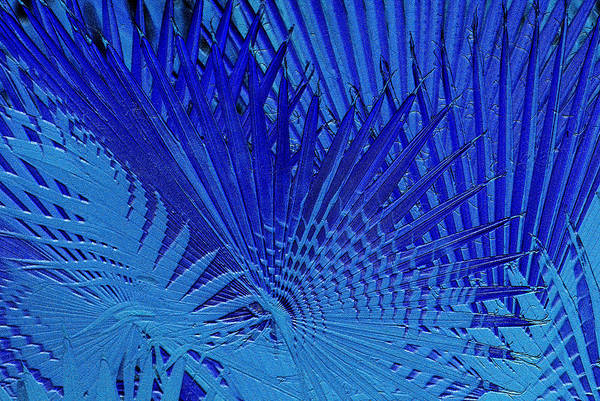 Palm Art Print featuring the photograph Blue Palms by Jan Roser