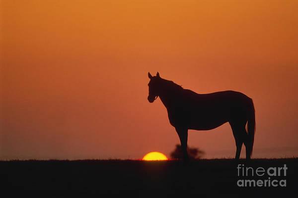 Thoroughbred Art Print featuring the photograph Bluegrass Sunset - Fs000285 by Daniel Dempster