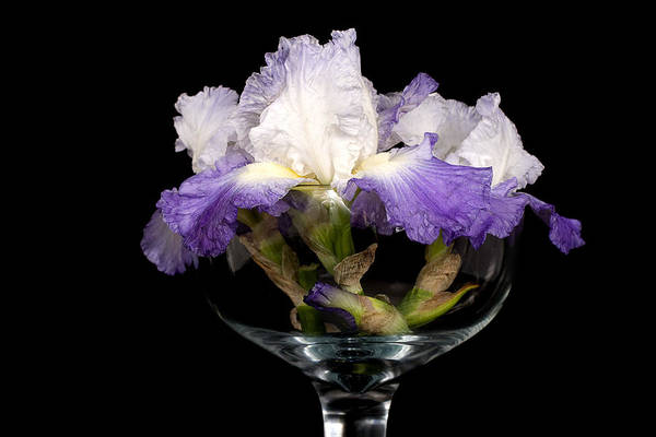 Iris Art Print featuring the photograph Bowl Of Iris by Trudy Wilkerson