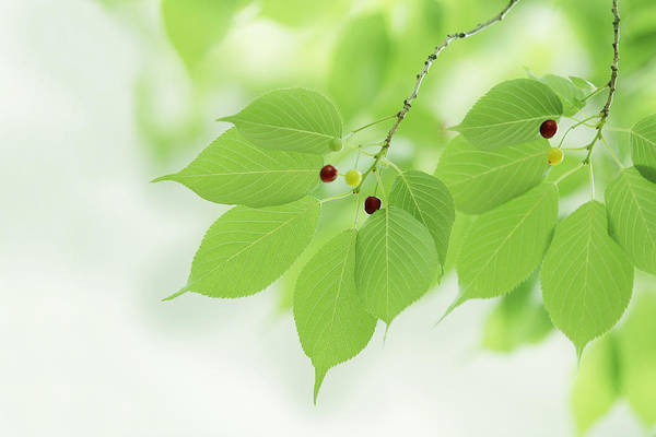 Horizontal Art Print featuring the photograph Bright Green Leaves by Imagewerks