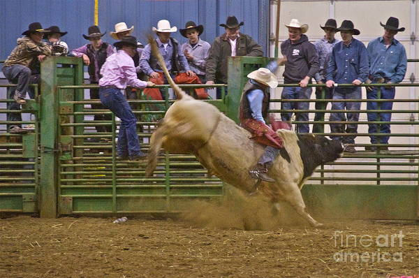 Photography Art Print featuring the photograph Bull Rider 2 by Sean Griffin