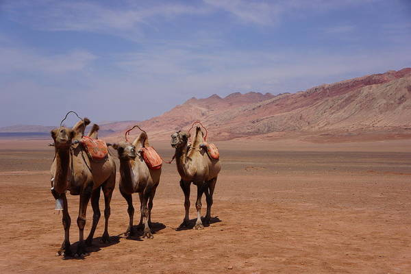 Horizontal Art Print featuring the photograph Camels On Desert With Huoyan Gobi Mountains by Huang Xin