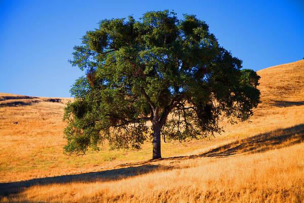 Tree Art Print featuring the photograph Campo Seco Tree by Joe Fernandez