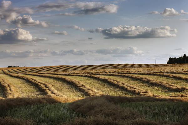 Alberta Art Print featuring the photograph Clouds Over Canola Field On Farm by Dan Jurak