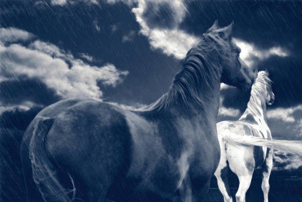 Rain Art Print featuring the photograph Come Rain Or Shine by Maggie Dee
