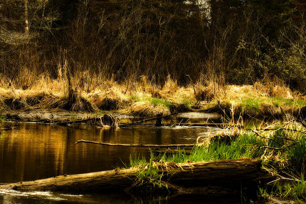 River Art Print featuring the photograph Country River by Gary Smith
