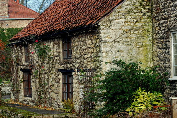 Art Print featuring the photograph Creeper Cottage by Doug Selig
