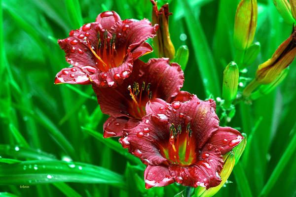 Flowers Art Print featuring the photograph Crimson Lilies In April Shower by Lisa Spencer
