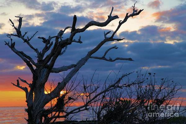 North Carolina Outer Banks Art Print featuring the photograph Dead Trees At Sunrise by Adam Jewell