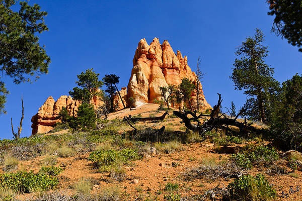 Bryce Canyon National Park Art Print featuring the photograph Desert Landscape Le by Greg Norrell