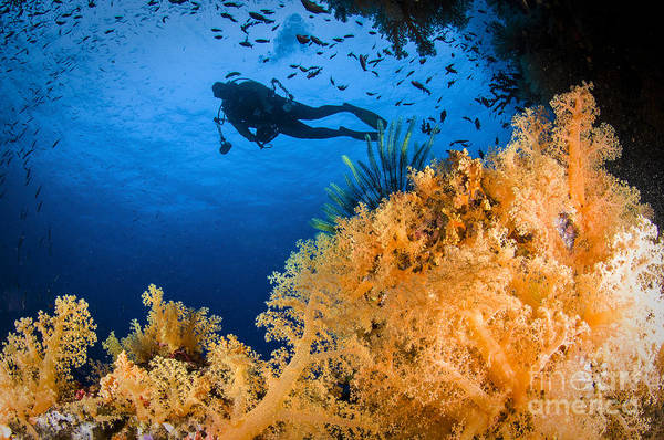 Crinoid Art Print featuring the photograph Diver Swimms Above Soft Coral, Fiji by Todd Winner