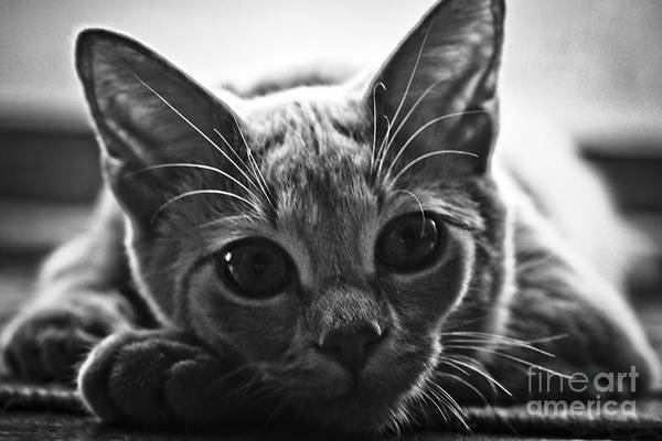 Kitten Art Print featuring the photograph Downtime by Kim Henderson