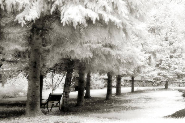Infrared Trees Park Scene Art Print featuring the photograph Dreamy Surreal Infrared Park Bench Landscape by Kathy Fornal