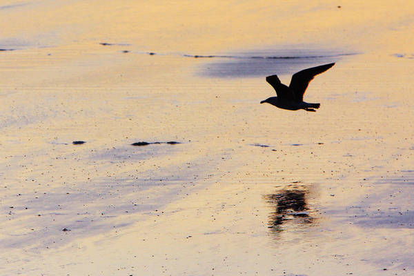 Maine Art Print featuring the photograph Early Morning Flight by Rick Berk