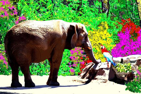 Elephant Art Print featuring the photograph Elephant-parrot Dialogue by Rom Galicia