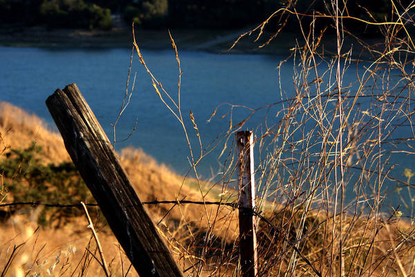 Fence Art Print featuring the photograph Fenceposts by Leonard Sharp