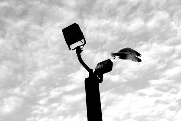 Digital Art Print featuring the photograph Flightpost by Marco Barraza