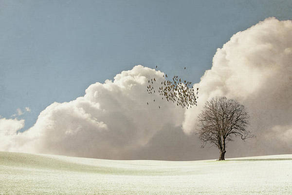 Horizontal Art Print featuring the photograph Flock Of Starlings Flying by Image by J. Parsons