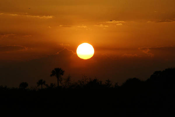Florida Sunset Art Print featuring the photograph Florida Sunset by Jeanne Andrews