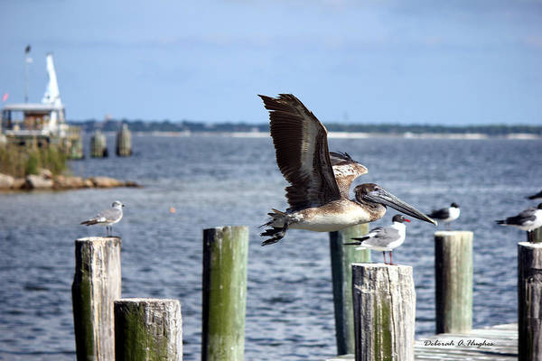 Pelicans Art Print featuring the photograph Fly By by Deborah Hughes