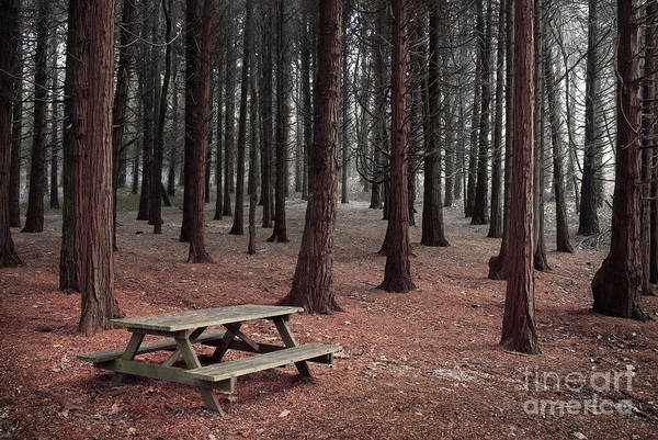 Autumn Art Print featuring the photograph Forest Table by Carlos Caetano