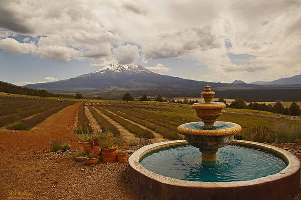 Shasta Lavender Farm Art Print featuring the photograph Fountain At Shasta Lavender Farm by Mick Anderson