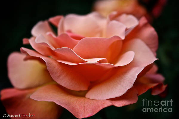 Garden Art Print featuring the photograph Fragile by Susan Herber