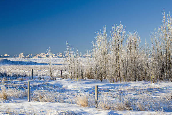 Agriculture Art Print featuring the photograph Frost-covered Trees In Snowy Field by Michael Interisano